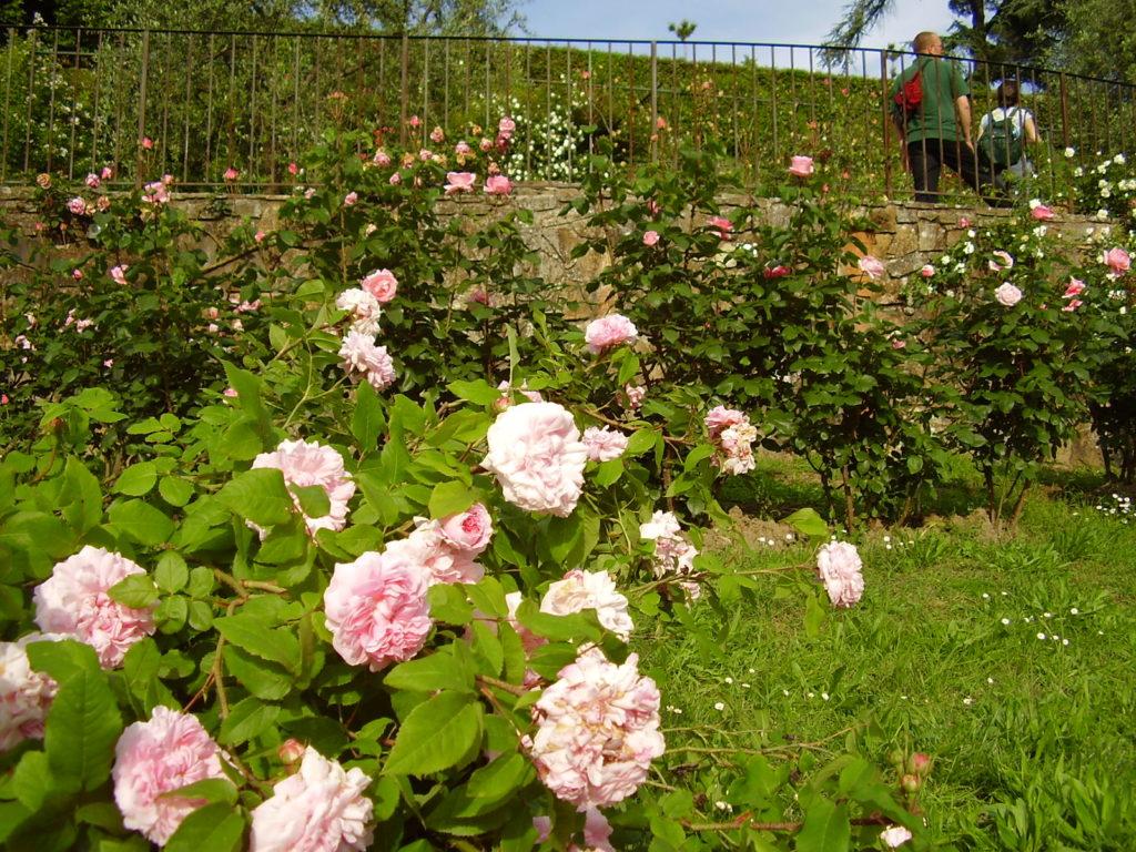 El Giardino delle Rose: Florencia en rosa subido
