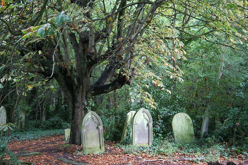 El árbol del Cementerio de Saint Pancras: ¿qué hacen las lápidas apiladas ahí?