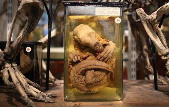 Museo de Historia Natural de Londres.