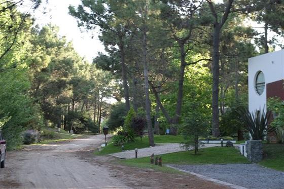 El bosque de Cariló.