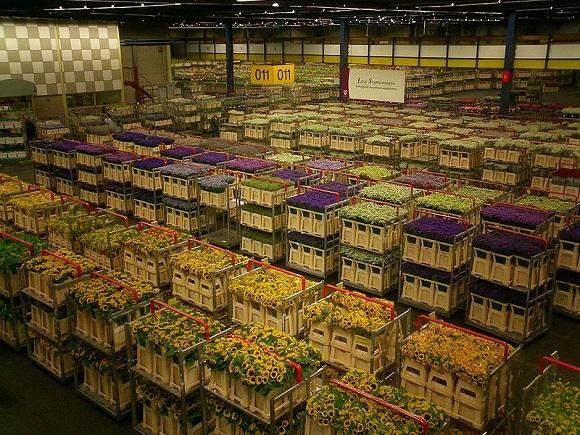 Mercado de Flores de Aalsmeer.