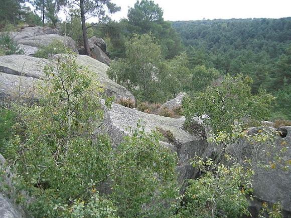 Bosque de Fontainebleau.