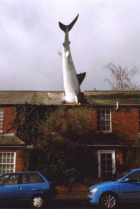 El tiburón de cabeza de Oxford.