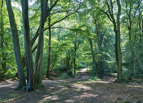 Bosque de Epping.