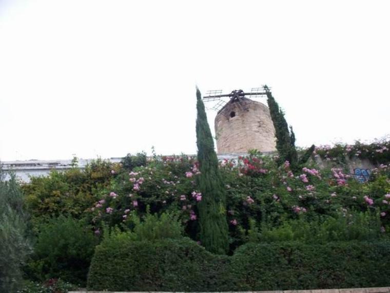 Visita turística por la ciudad de Palma con la opción de paseo en barco o el castillo de Bellver