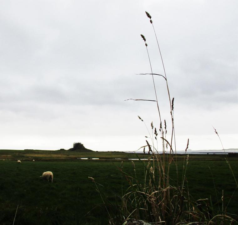 Holy Island, Alnwick Castle, Northumberland desde Edimburgo